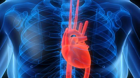 cardiovascular_disease