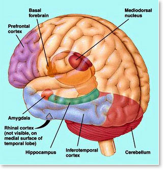 Brain-diagram2