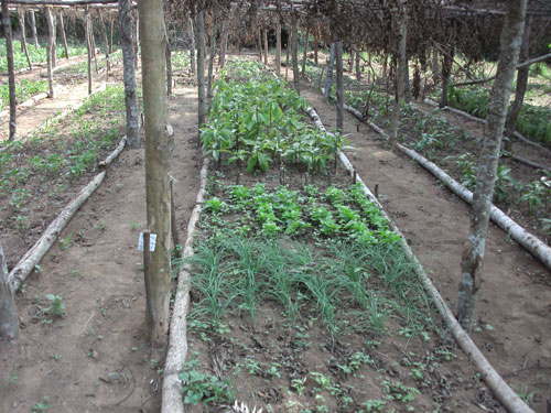 Rwandafarming